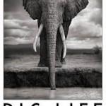biglifefoundation
