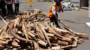 Blood ivory funding terrorism